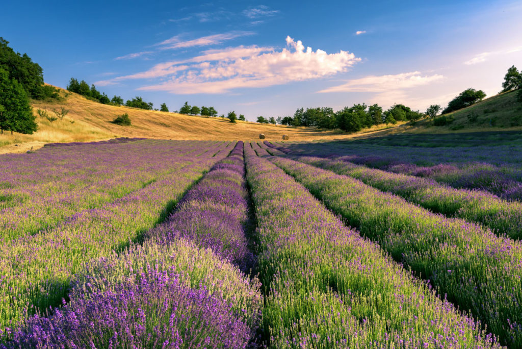 _BBB6310-lavanda-photography-roberto-melotti-magazzino26-fashion-blog
