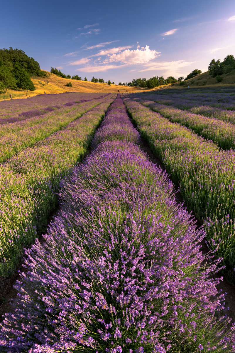 _BBB6318-lavanda-photography-roberto-melotti-magazzino26-fashion-blog